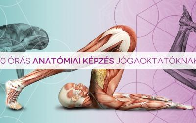 60 órás anatómia képzés jógaoktatónak